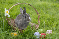 Little easter rabbit Royalty Free Stock Photos