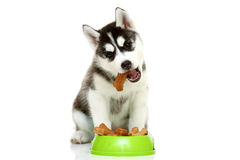Little eating food Stock Images