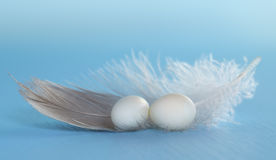 Little eggs and feather Royalty Free Stock Images