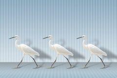 Little egret. White heron bird Royalty Free Stock Photography