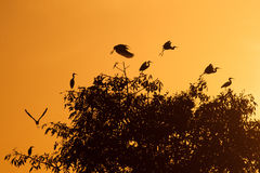 Little Egrets. Royalty Free Stock Images