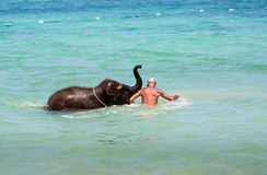 Little elephant calf swims in the sea with the man Stock Images