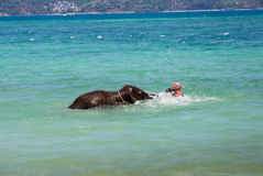 Little elephant calf swims in the sea with the man Royalty Free Stock Photo