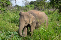 Little elephant hiding in green grass in nature Stock Images