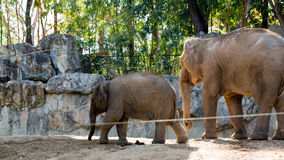 The little elephant with mother Royalty Free Stock Photography