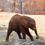 Little elephants Royalty Free Stock Photos