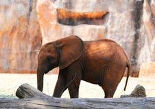 Little elephants Stock Photo