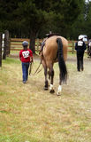 Little Equestrian. Big horse with little rider stock images