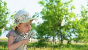 A little European girl blows fluffy seeds from a white dandelion. Little cute girl dressed in a gray dress and a hat blows fluffy seeds from a dandelion stock video