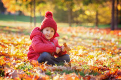 Little excited boy playing with leaves in the park Royalty Free Stock Image