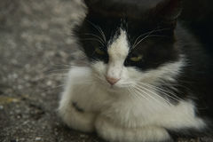 Little face of a cat. Sad little face of a cat in the rest position, and dipped in his mood Royalty Free Stock Images