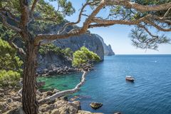 Little fairy tale cove with clear blue water and the pine forest. Clear blue sea and pine forest on the shore royalty free stock photo