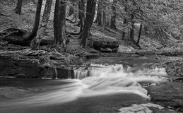 Little Falls in Black and White. A stream with small waterfalls in a wooded area in black and white Royalty Free Stock Images