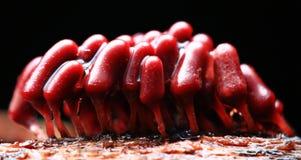 Free Little Family Mold Fungi Stock Image - 62248951