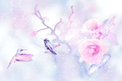Little fantastic blue birds in the snow and frost on the pink roses. Artistic Christmas winter image toned pink and blue. Winter wonderland stock photo