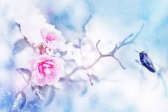 Little fantastic blue and purple bird in the snow and frost on the background of beautiful pink roses. royalty free stock photo