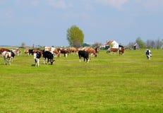 Little farm Stock Images