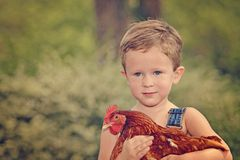 Little farm boy holding red chicken. Boy eating sandwich fishing bridge Royalty Free Stock Image