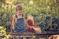 Little farm boy holding red chicken Royalty Free Stock Photos