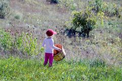 Little farm girl in orchard with basket. A cute little farm girl in  pink overlooks an orchard with her basket, ready to pick apples Royalty Free Stock Image