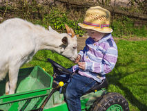 Little farm kid and goat Stock Images
