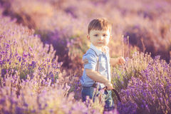 Little fashionable boy having fun in lavender summer field. Royalty Free Stock Photos