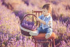 Little fashionable boy having fun in lavender summer field. Royalty Free Stock Photography