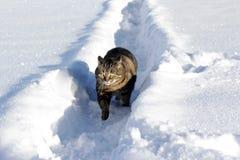 Little fat cat running through deep snow Stock Images