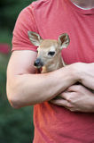 Little Fawn Closeup Royalty Free Stock Photos