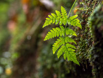 Little fern hanging down the wall Stock Images
