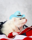 Little ferret on the USA flag background Stock Images