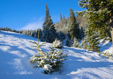 Little fir tree covered by fresh snow Royalty Free Stock Photos