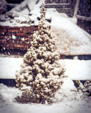 Little Fir Tree with Snow on branches and Snowflakes Winter Stock Images