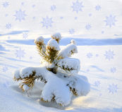 Little fir tree  snow covered Stock Image