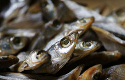 Little fish. Closeup of tiny little fish for Chinese seafood Stock Images