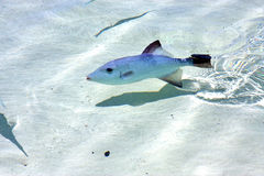 Little fish   isla contoy           in     foam  the sea   day Stock Image