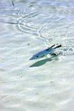 Little fish   isla contoy         in  roath  drop sunny day  wav Stock Photo
