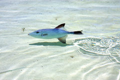 Little fish   isla         in mexico  Royalty Free Stock Photo