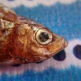 Little fish royalty free stock photo