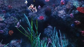Little Fish swimming aquarium. Little Fish swimming in the aquarium stock footage