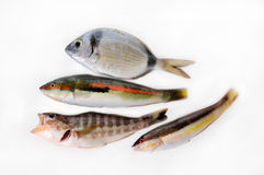 Little fishes Stock Images