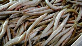 Little fisk Royaltyfria Bilder