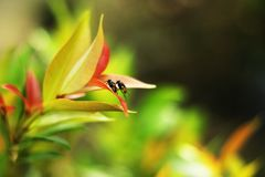 The little romance. These little flies get a beautifull romance Stock Photography