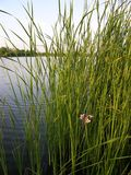 Little Flower.  stock image