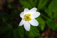 Little flower Royalty Free Stock Photos