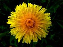 A little Flower. Beautiful flower from garden royalty free stock image