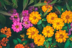 The Little flower color white, red, purple and orange in the flowers farm stock image