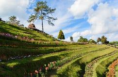 Little flower garden. The little flower in the garden in sunny day royalty free stock photo