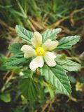 A lovely flower hinden in the wood stock image