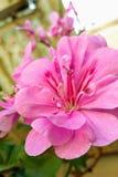Little flower Stock Images
